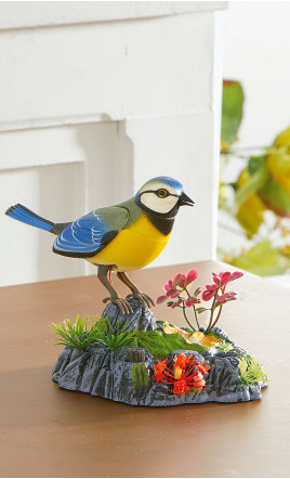 oiseau musical - GENRE